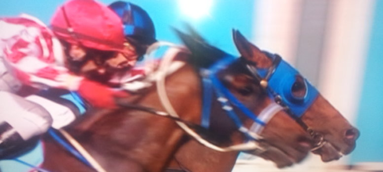 buffering-wins-manikato-stakes